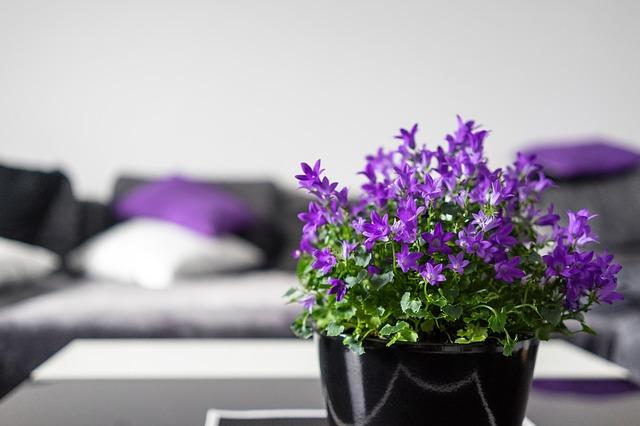 fialová kytička.jpg